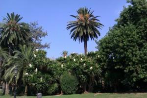 Ciutadella Parc