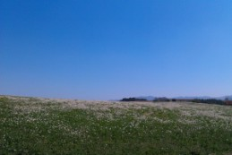 Green Fields + Blue Skies = Views to Die For!